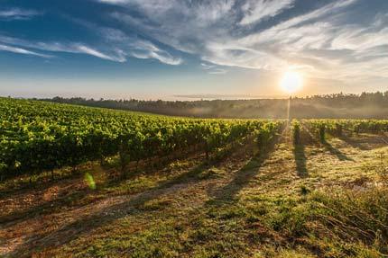 сбор винограда в Риквире (Эльзас)
