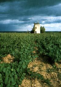 виноградник Мюскаде в окрестностях Лире