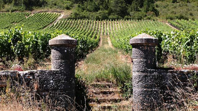 продажа виноградников во франции