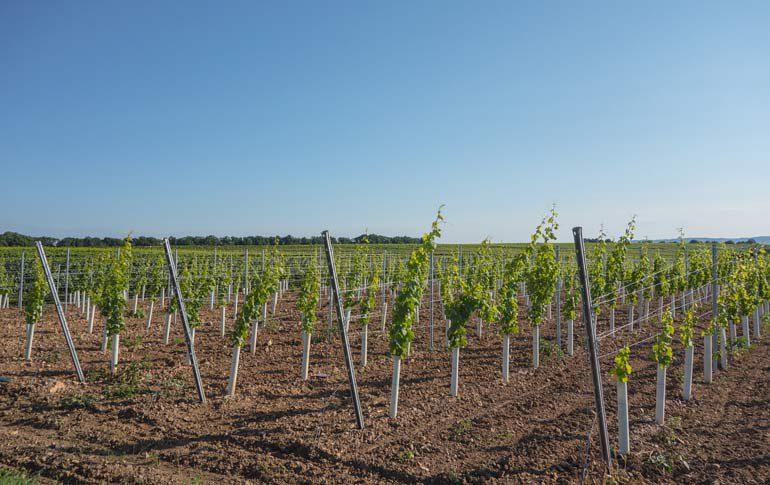Купить виноградник во франции регион бордо недвижимость в испании аренда
